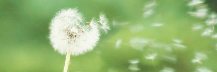 what-is-allergy.jpg